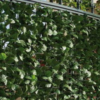 Kunsthaag balkonscherm tuinscherm hedera klimop 100x300cm